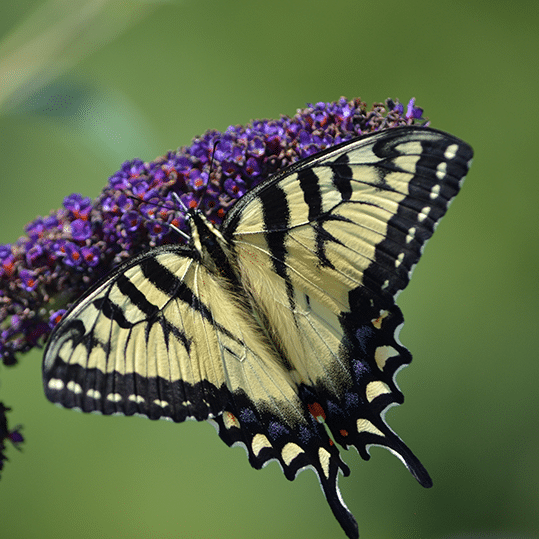 In nature, the caterpillar transforms into a butterfly in similar fashion as a dramatic business transformation.