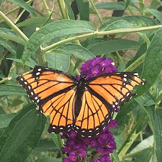 The monarch emerges. A 'caterpillar' moments earlier, this butterfly represents a dramatic business transformation.